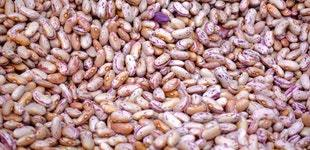 Nuts grains produce